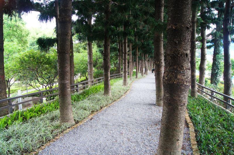宛若森林小徑的南洋杉步道