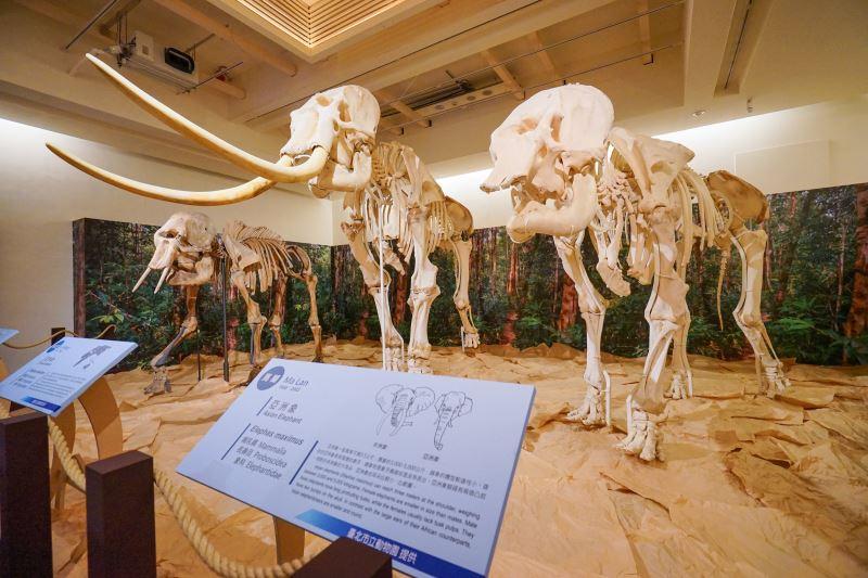 圖2_與臺博館及臺北市立動物園的林旺標本打卡合照可換精美紀念品