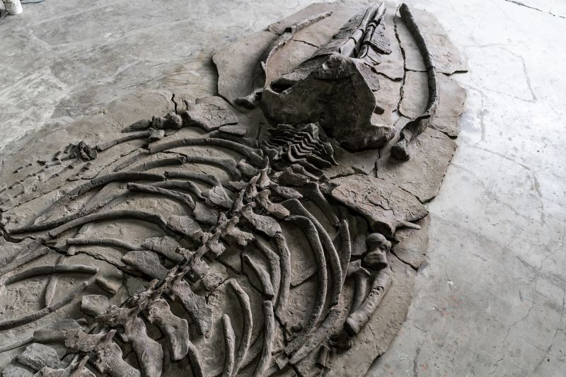 「クジラ伝説遺跡」