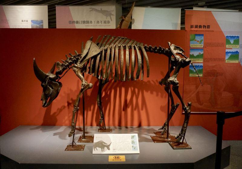 圖4德氏水牛模型是本次必看的展品之一