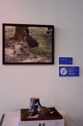 本次特別將智青攝影作品以3D列印呈獻,例如這幅鴨子主題作品,不但有3D列印,亦能發出鴨子的聲音,視障等特殊群體可透過以觸摸及聽覺,來感受攝影構圖與內容。