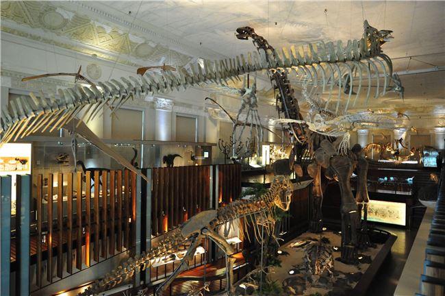土銀展示館內部照片,整個銀行大廳全是各式恐龍化石,有的高至二樓天花板。
