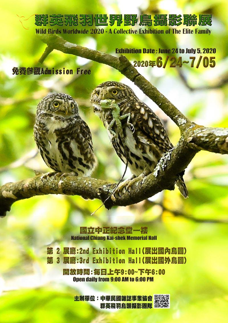 大開眼界—群英飛羽世界野鳥攝影聯展 中正紀念堂 展翅翱翔