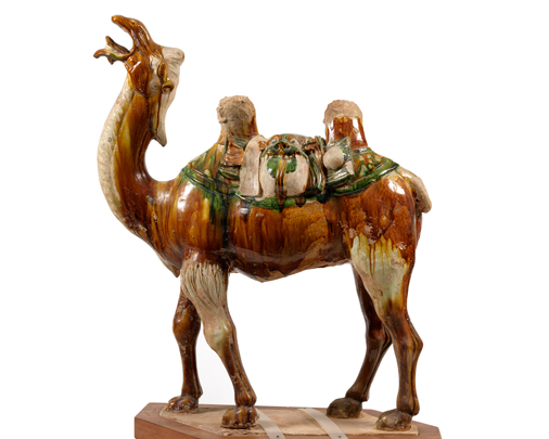 Tri-colour camel carrying rider