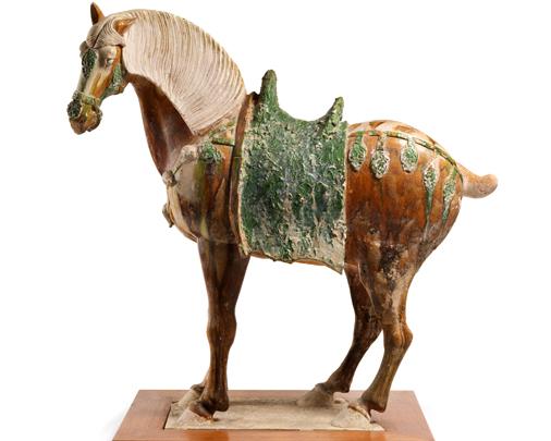 Tri-colour  horse