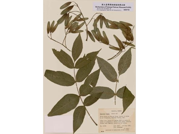 The Autumn of North Country- Herbarium Specimen of Temperate Deciduous Forest Exhibition