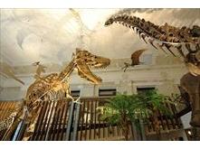 Walking within Skeletons: