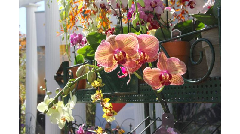 Taiwan: A World of Orchids