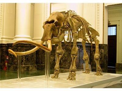 長毛象化石