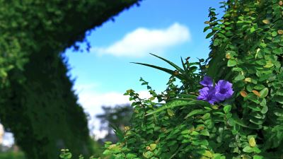 【四季花卉】紫花蘆利草